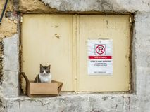 Feral cat malta. A feral cat sitting in a box on a window ledge in the maltese capital of valletta Stock Photos