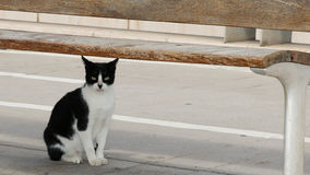 Feral Cat. One of the many hundreds of feral cats in Cadiz, Spain Stock Photography