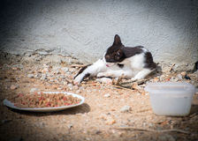 Feral cat outdoors. Stock Photography