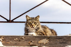 Feral Cat. Relaxing  on a high ledge Stock Photography