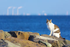 Feral cat at the sea shore. Feral cat staring at something at the sea shore Stock Photography