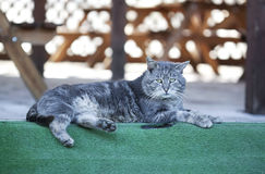 Feral cat - RAW format Stock Images