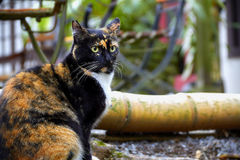 Feral Cat Stock Image