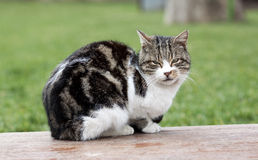 Feral cat - RAW format Royalty Free Stock Photography