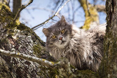 Feral cat sitting on a tree, waiting for the fire department, re. Feral cat sitting on a tree, concept waiting for the fire department, rescue and help Royalty Free Stock Photography