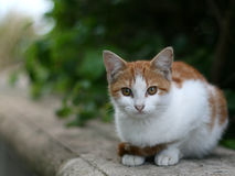 Feral cat. On stone wall surrounded by green foliage stock photos