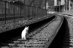 Feral cat. White feral cat on the railway in black and white Royalty Free Stock Photos