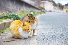 2 feral cats. Get along so well Stock Images