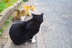 3 feral cats. A meeting of 3 feral cats Royalty Free Stock Photography