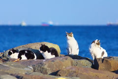 Feral cats at the sea shore Royalty Free Stock Photos