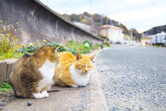 2 feral cats. Are sitting and relaxing Royalty Free Stock Photos