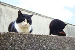 2 feral cats. Sitting on a stone wall Royalty Free Stock Photography