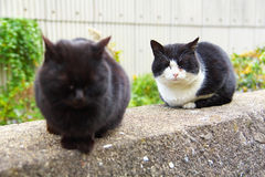 2 feral cats. Sitting on a stone wall Royalty Free Stock Images