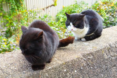 2 feral cats. Sitting on a stone wall and staring at something Stock Images