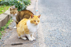 2 feral cats. Staring at something Stock Photo