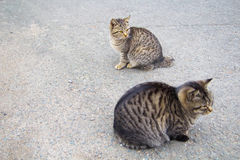 2 feral cats. Staring at something Royalty Free Stock Photos