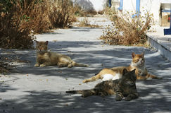 Feral cats. Three feral cat resting in the shadow Royalty Free Stock Image