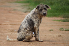 Feral dog. Being  sit on road and play Stock Photo