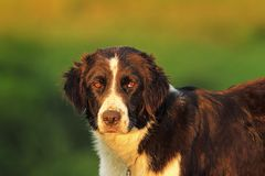 Feral dog portrait Royalty Free Stock Photo