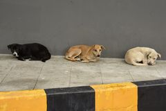 Feral dogs Spp. Canis. Homeless canines living and sleeping in a sheltered area around Pattaya, Thailand royalty free stock photos
