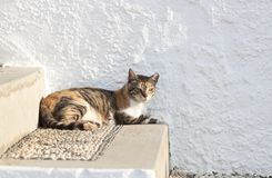 Feral greek cat Stock Photo