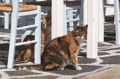 Feral greek cats. Feral cats in greek island of Paros royalty free stock image