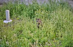 Tabby cat surrounded by grass royalty free stock photo