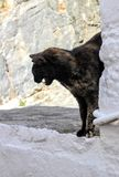 Feral Tortoiseshell Cat. Claims corner of street in Lindos Greece royalty free stock image