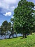 Ferapontovo, em julho de 2018 A natureza do vologda, muito bonita em Rússia imagem de stock royalty free