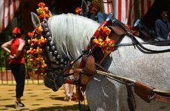 A horse and a woman at Feria de Abril royalty free stock photo