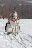 Feriado de inverno Imagem de Stock Royalty Free