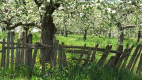 Feriado do campo, cerca de madeira, árvore da mola da flor, natureza verde filme