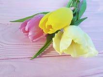 Feriado fresco do ramalhete das tulipas em um março de madeira cor-de-rosa do fundo romântico Fotografia de Stock Royalty Free