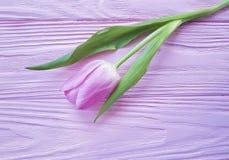 Feriado fresco do ramalhete das tulipas em um março delicado bonito de madeira cor-de-rosa do fundo romântico Foto de Stock Royalty Free
