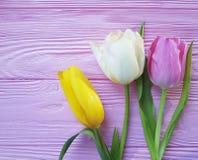 Feriado fresco do ramalhete das tulipas em um março delicado do fundo da folha de madeira cor-de-rosa romântico Imagem de Stock Royalty Free