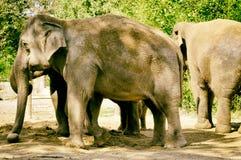 Feriado selvagem animal cinzento da excursão do safari de África do elefante foto de stock royalty free