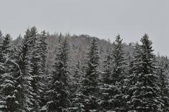 Feriados de inverno em Zakopane imagens de stock royalty free