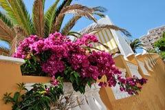 Feriados perto do oceano em Tenerife, canário, Espanha, Europa Imagens de Stock