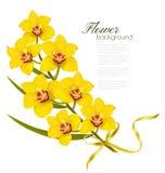 Ferie blommar bakgrund med gula orkidér och det guld- bandet Fotografering för Bildbyråer