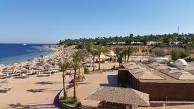 Ferie i Egypten Strand och palmträd Fotografering för Bildbyråer