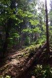 Ferier i bergen Royaltyfria Bilder