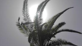 Ferieteman - oavkortad sol för palmträd - himmelsikt från palmträdet Royaltyfri Fotografi