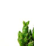 Fermé de la mini usine de cactus sur le fond blanc, photo verticale avec l'espace libre pour la conception Photographie stock libre de droits