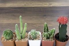 Fermé vers le haut du cactus et des succulents dans de petits pots de fleurs images stock