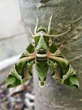 Fermé vers le haut du papillon de nuit image stock