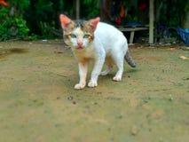 Fermata e sguardo fisso del gatto Fotografia Stock