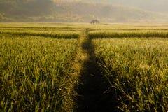 Ferme à la rizière Images stock