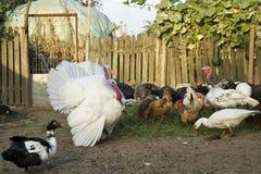 Ferme avicole Photographie stock