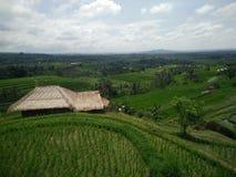 Ferme Bali Indonésie de riz Photo stock