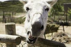 Ferme d'âne de Brown Images stock